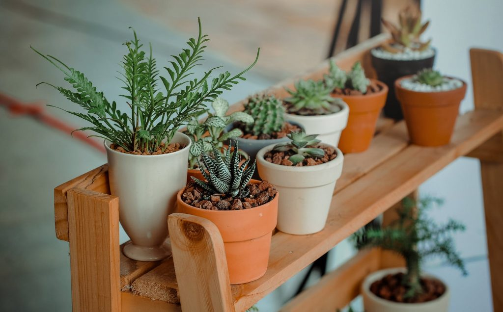 A small bunch of house plants growing in ceramic pots on a bench.