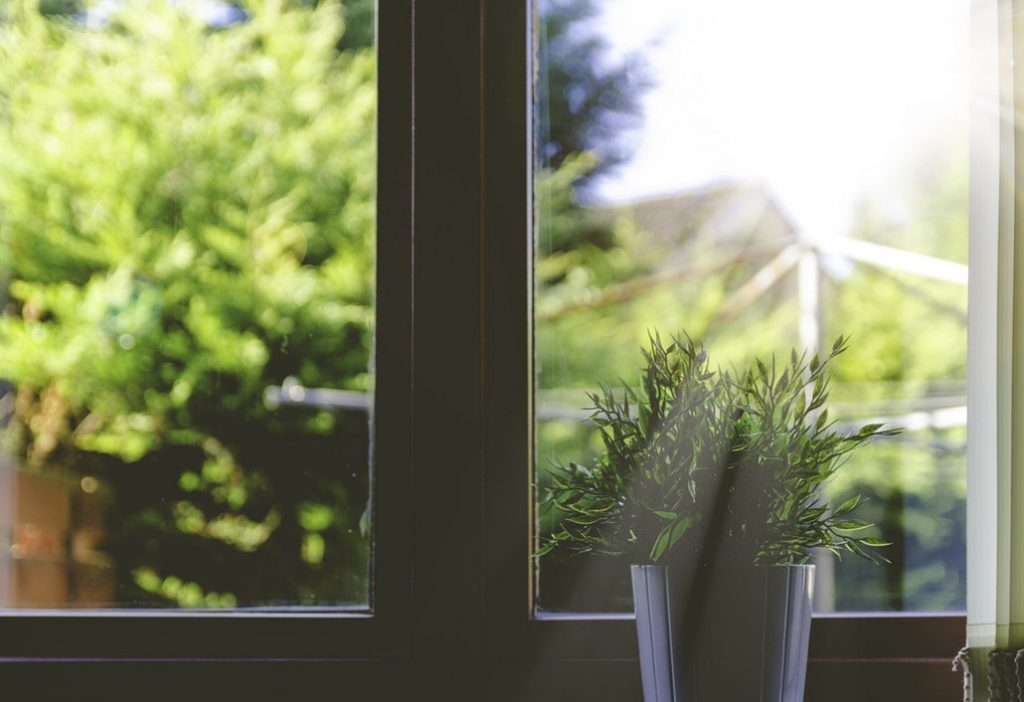 Sunshine shining through a glass window on to a house plant.